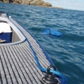 Халка Railblaza Eye25 Pair WH - редът при въжетата на лодката е хубаво нещо